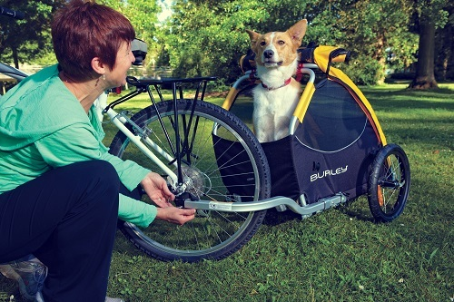Pet Bike Trailer With Dog